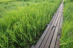 Puente de madera de 100 años entre el campo del arroz en Nakhon Ratchasi Fotografía de archivo