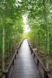 Puente de madera de la manera en bosque natural del mangle Fotografía de archivo