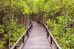 Puente de madera el mangle del bosque en Petchaburi, Tailandia fotos de archivo
