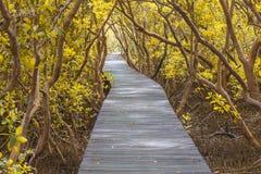 Puente de madera en bosque del mangle Imagenes de archivo