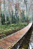 Puente de madera en el bosque Imagen de archivo libre de regalías
