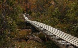 Puente de madera en el bosque Foto de archivo libre de regalías