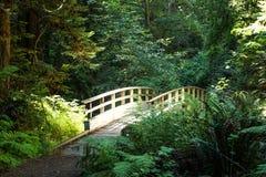 Puente de madera en el bosque Fotos de archivo libres de regalías