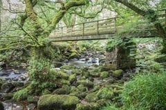 Puente de madera en el bosque Foto de archivo