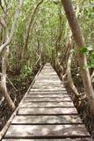 Puente de madera en el bosque del mangle, centro de Tailandia Imagen de archivo libre de regalías