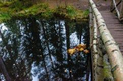 Puente de madera en el bosque del otoño Imagenes de archivo