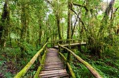 Puente de madera en el sendero del angka en parque nacional del inthanon del doi Foto de archivo libre de regalías