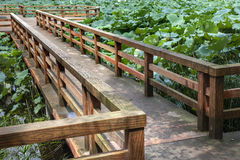 Puente de madera en la charca de loto Imágenes de archivo libres de regalías