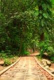 Puente de madera en selva Foto de archivo libre de regalías