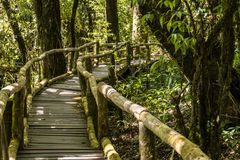 Puente de madera en selva tropical tropical de las montañas cubiertas de musgo en las montañas de Tailandia Parque nacional de Do fotos de archivo