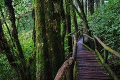 Puente de madera en selva tropical tropical Fotografía de archivo libre de regalías