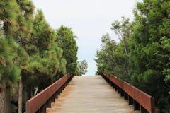 Puente de madera franqueada con el pino imagen de archivo