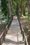 Puente de madera a lo largo del bosque Foto de archivo libre de regalías