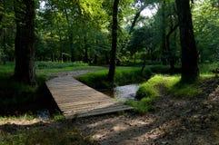 Puente de madera que lleva en la madera Imagen de archivo libre de regalías