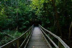 Puente de madera que lleva en la madera Fotos de archivo libres de regalías