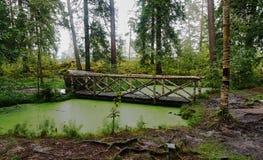 Puente de madera sobre el lago del bosque Fotos de archivo libres de regalías