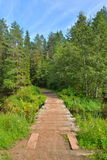 Puente de madera sobre el río del bosque en un día de verano Foto de archivo libre de regalías
