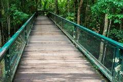 Puente de madera verde Imágenes de archivo libres de regalías