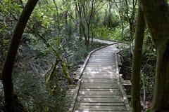 Puente de madera viejo en el medio de un bosque Fotos de archivo