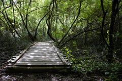 Puente de madera viejo en el medio de un bosque Foto de archivo libre de regalías
