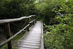 Puente de madera viejo en el medio de un bosque Fotos de archivo libres de regalías