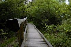 Puente de madera viejo en el medio de un bosque imagen de archivo libre de regalías