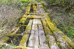 puente de madera viejo en la madera, barranco, bosque virginal imagenes de archivo