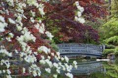 Puente de piedra detrás del follaje Imagen de archivo