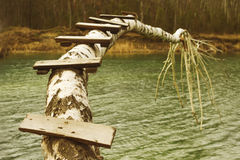 Puente de registro de madera sobre el río del bosque Foto de archivo