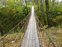 Puente de suspensión en el bosque Imagen de archivo libre de regalías
