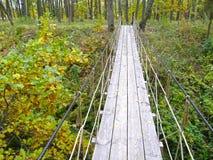 Puente de suspensión en el bosque Fotos de archivo