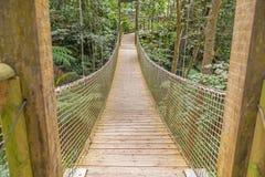 Puente de suspensión en el bosque Foto de archivo