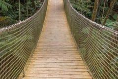 Puente de suspensión en el bosque Imágenes de archivo libres de regalías