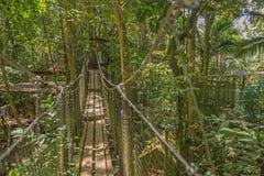 Puente de suspensión en el bosque Imagenes de archivo