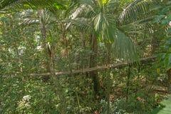 Puente de suspensión en el bosque Fotografía de archivo libre de regalías