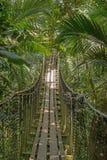 Puente de suspensión en el bosque Foto de archivo libre de regalías
