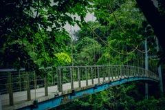 Puente de suspensión en el bosque Fotografía de archivo