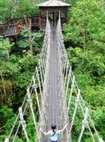 Puente de suspensión en parque de naturaleza Fotografía de archivo libre de regalías