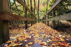 Puente del bosque Fotos de archivo