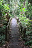 Puente del camino en la selva Imagen de archivo libre de regalías