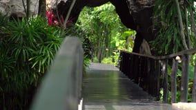 Puente del camino en un fondo tropical del parque Paseo marítimo del puente en el parque almacen de video