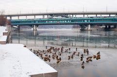 Puente del metro sobre el río de Moscú del invierno Fotografía de archivo libre de regalías