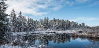 Puente del pie en bosque de un invierno Nieve caida fresca entonces cubierta en cristales Fotos de archivo libres de regalías