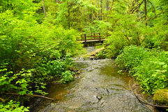 Puente del río en Oregon Imagen de archivo libre de regalías