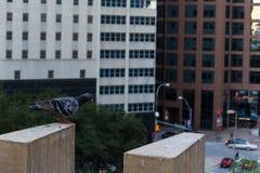 Puente del suicidio de la paloma Imagenes de archivo