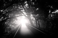 Puente en bosque foto de archivo