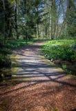 Puente en bosque Imagenes de archivo