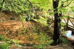 Puente en bosque Fotografía de archivo libre de regalías