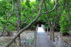 Puente en bosque del mangle Imágenes de archivo libres de regalías