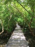 Puente en el bosque del mangle, proyecto real, Tailandia Fotos de archivo libres de regalías